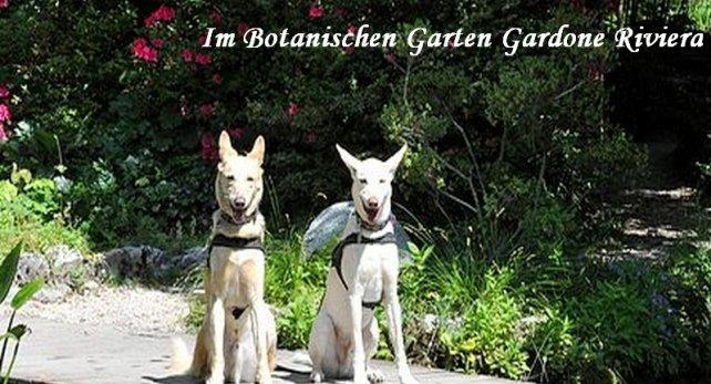 ferienwohnung gardasee mit hund